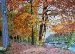 Autumn, Strid Woods